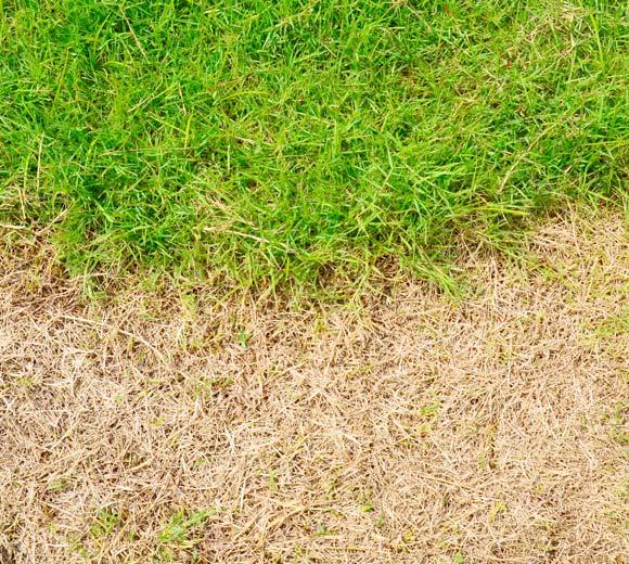 brown spots in lawn